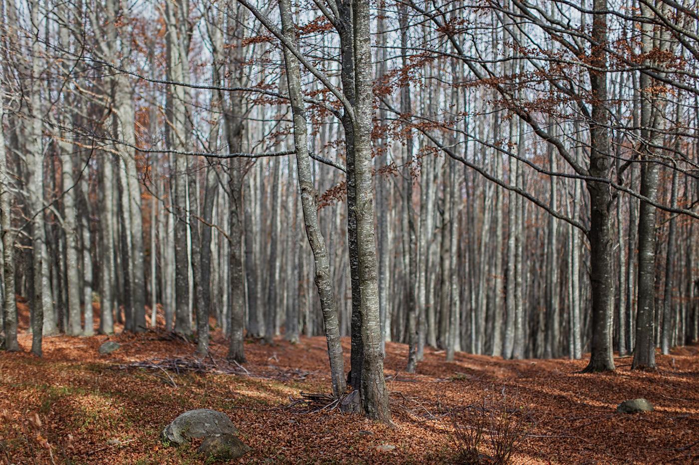 wood mountain Nature Landscape Tree