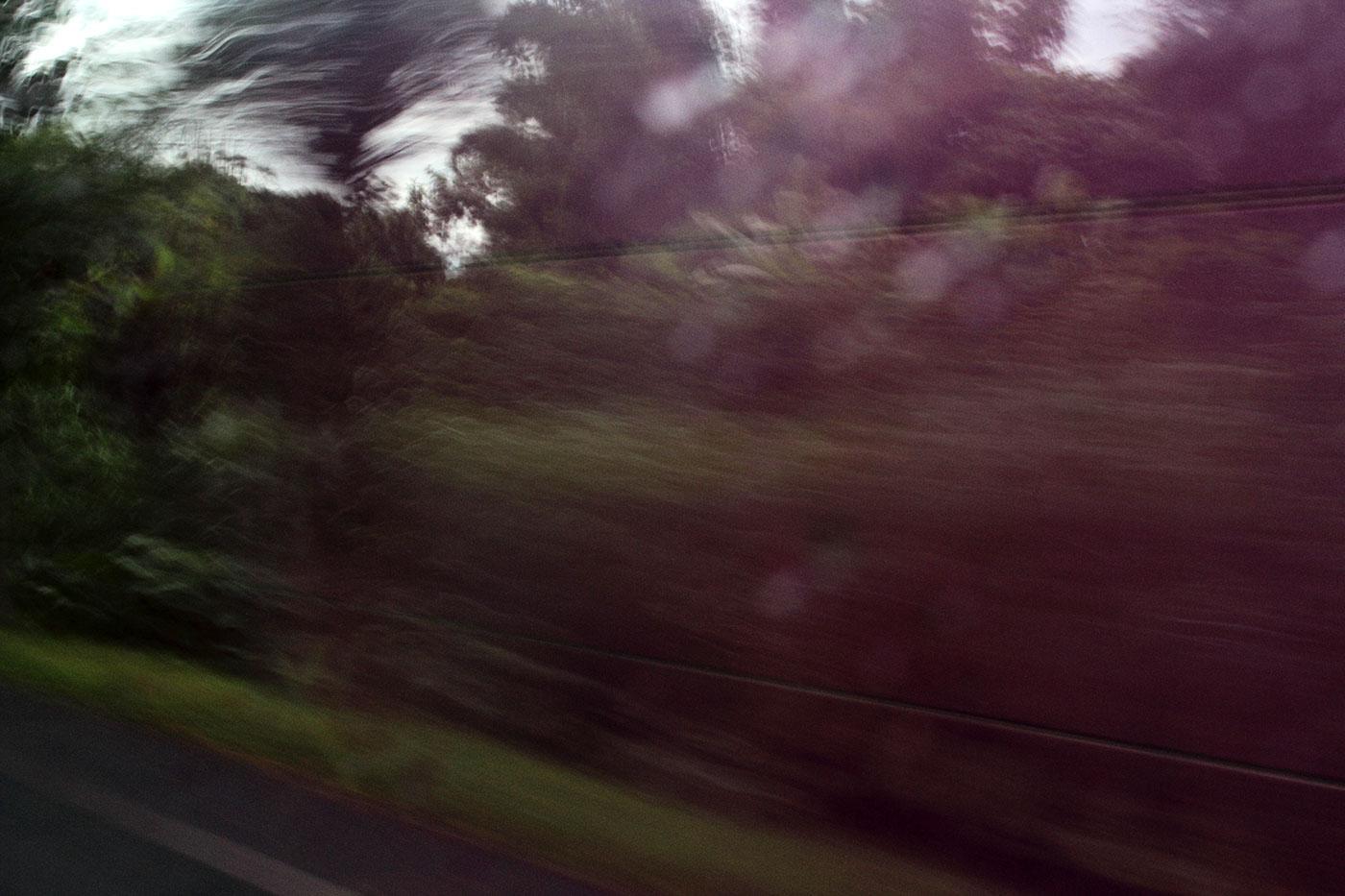 bali Travel photo capturing Island monkey colour Editing  Nature mythopoetisch
