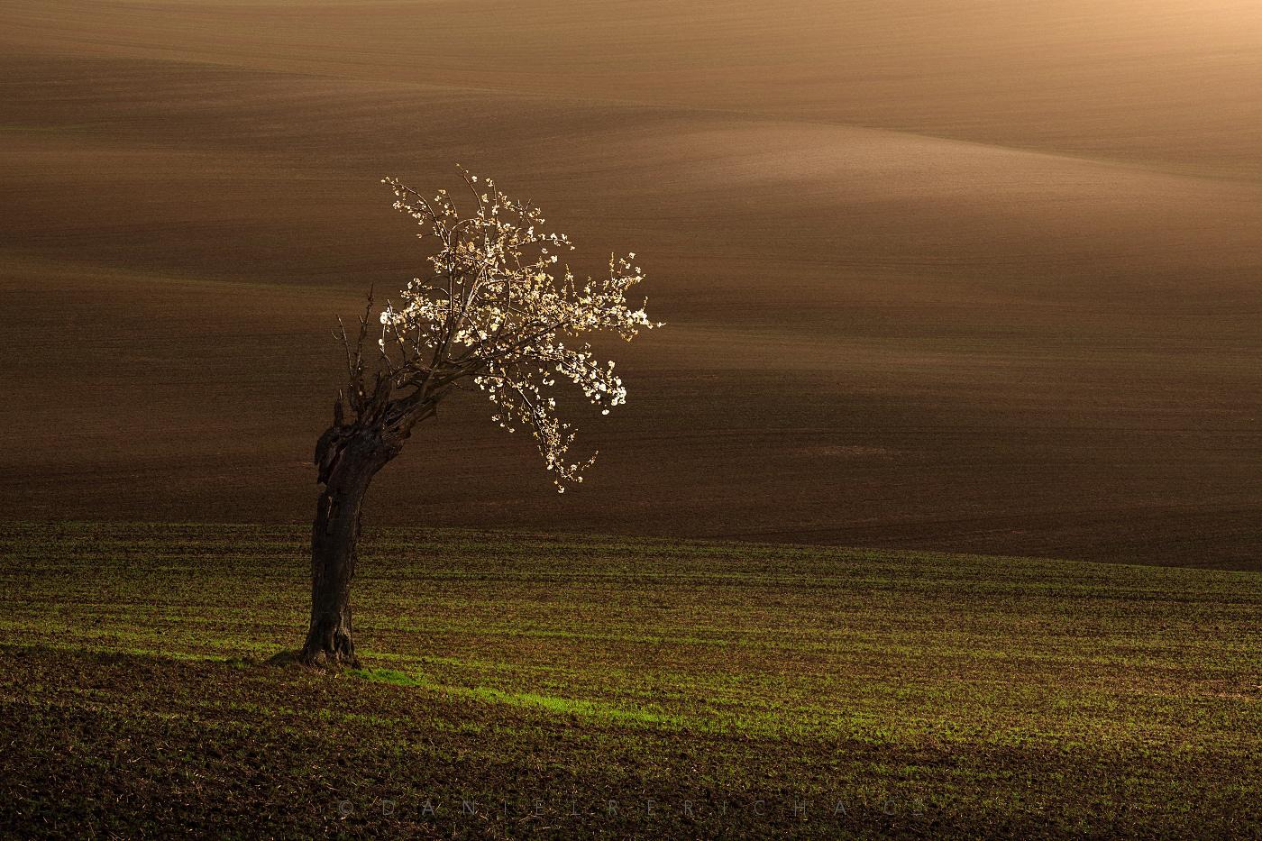 Spring South Moravia, Moravian Tuscany.