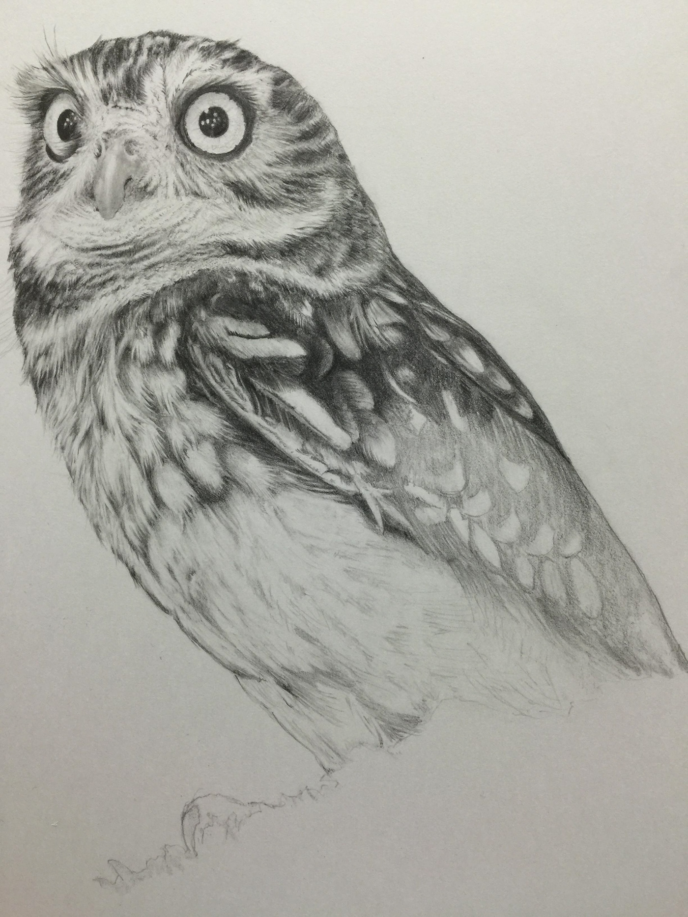 Pencil drawing little owl on behance