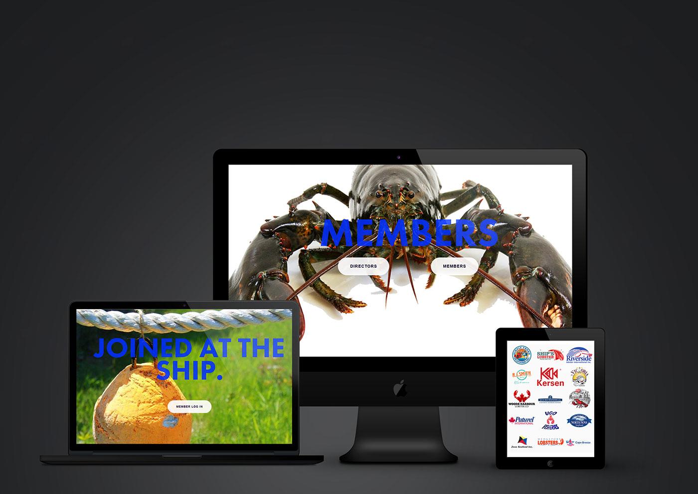 seafood nova scotia lobster fish Web Design  web development