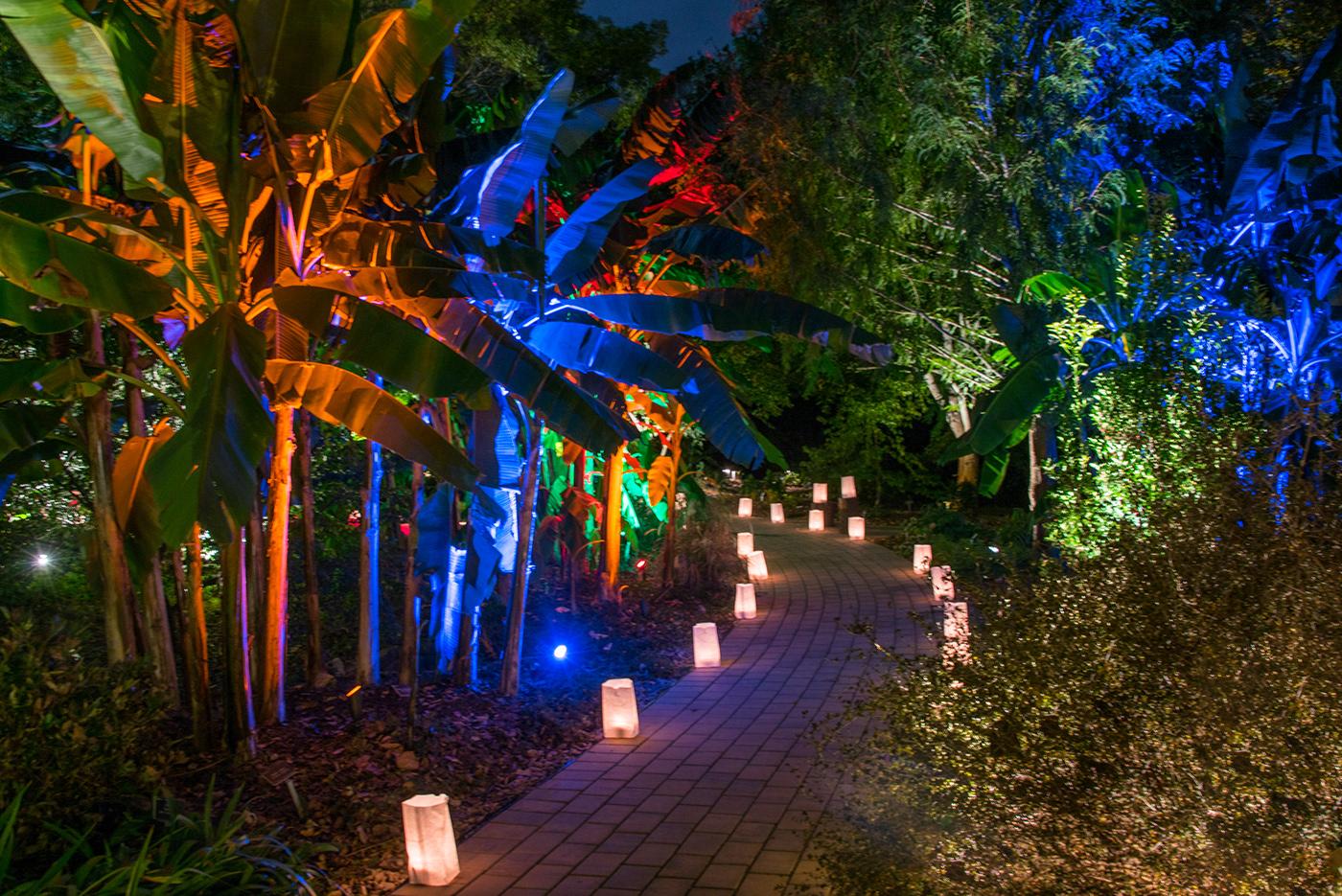 Moonlight In Garden JC Raulston Arboretum ncsu arboretum Botanical garden lighting exhibition landscape lighting music Food  Entertainment