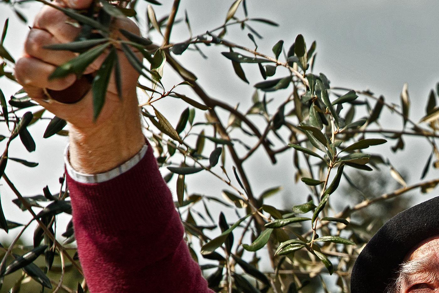 Andriotis Greece extra virgin corfu Olive Oil evoo christrivizas trivizas