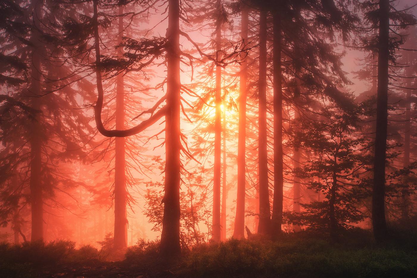 Bavaria Bayern Deutschland fog forest germany nebel wald wood