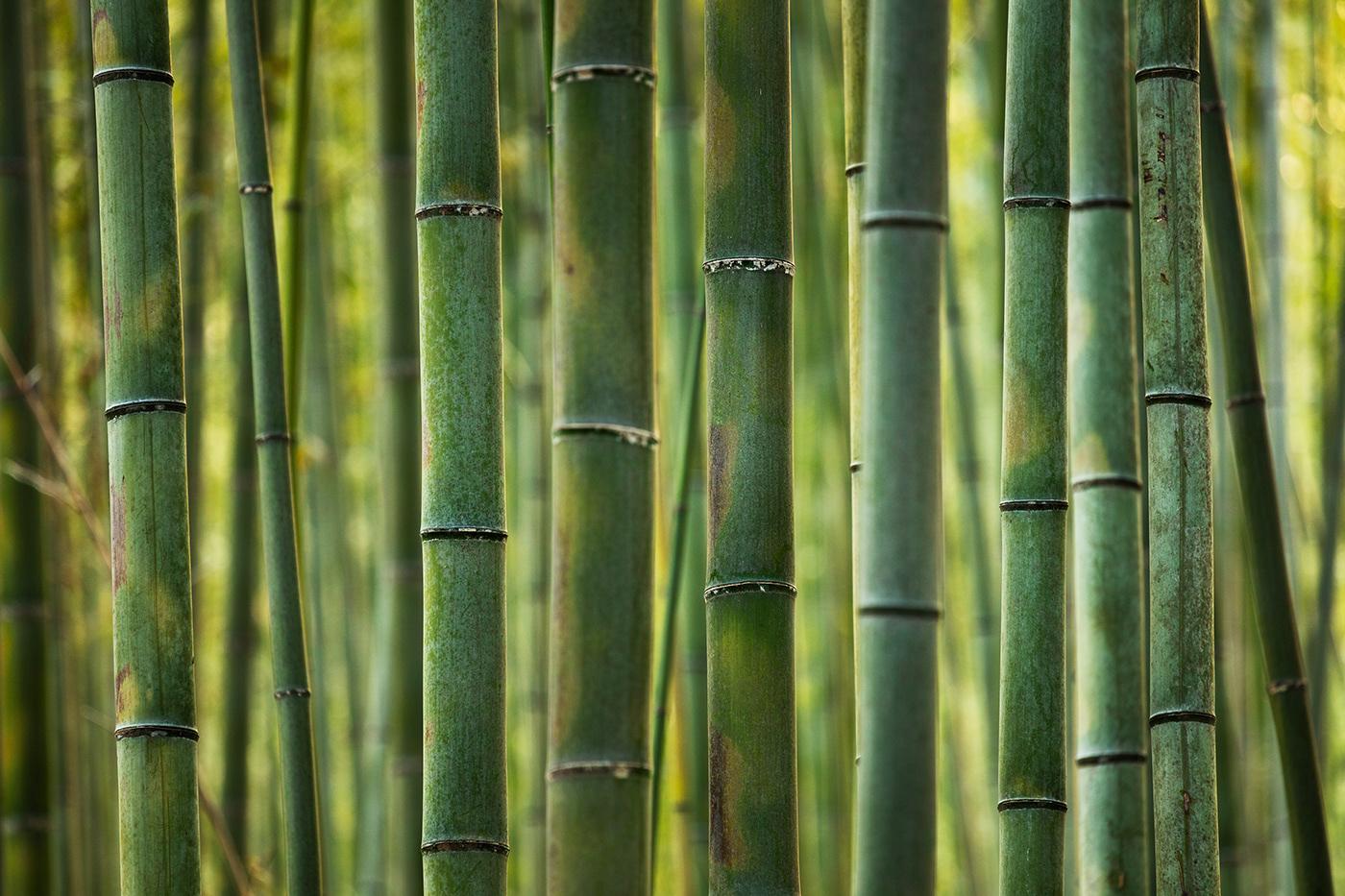Image may contain: hinge and bamboo