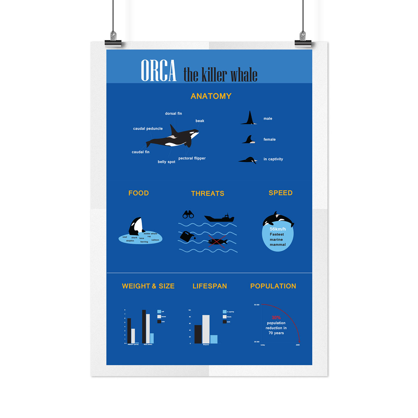 Orca, the killer whale infographic on Behance