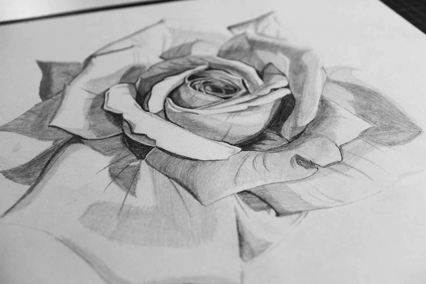 精美的19張玫瑰花水彩素描欣賞