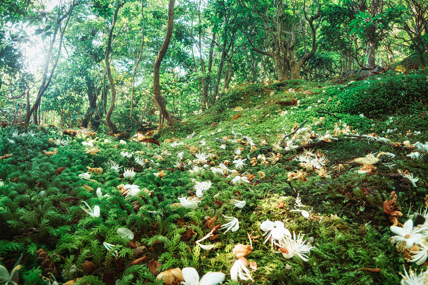 summer forest of dwarfs. Many small flowers fall from above.