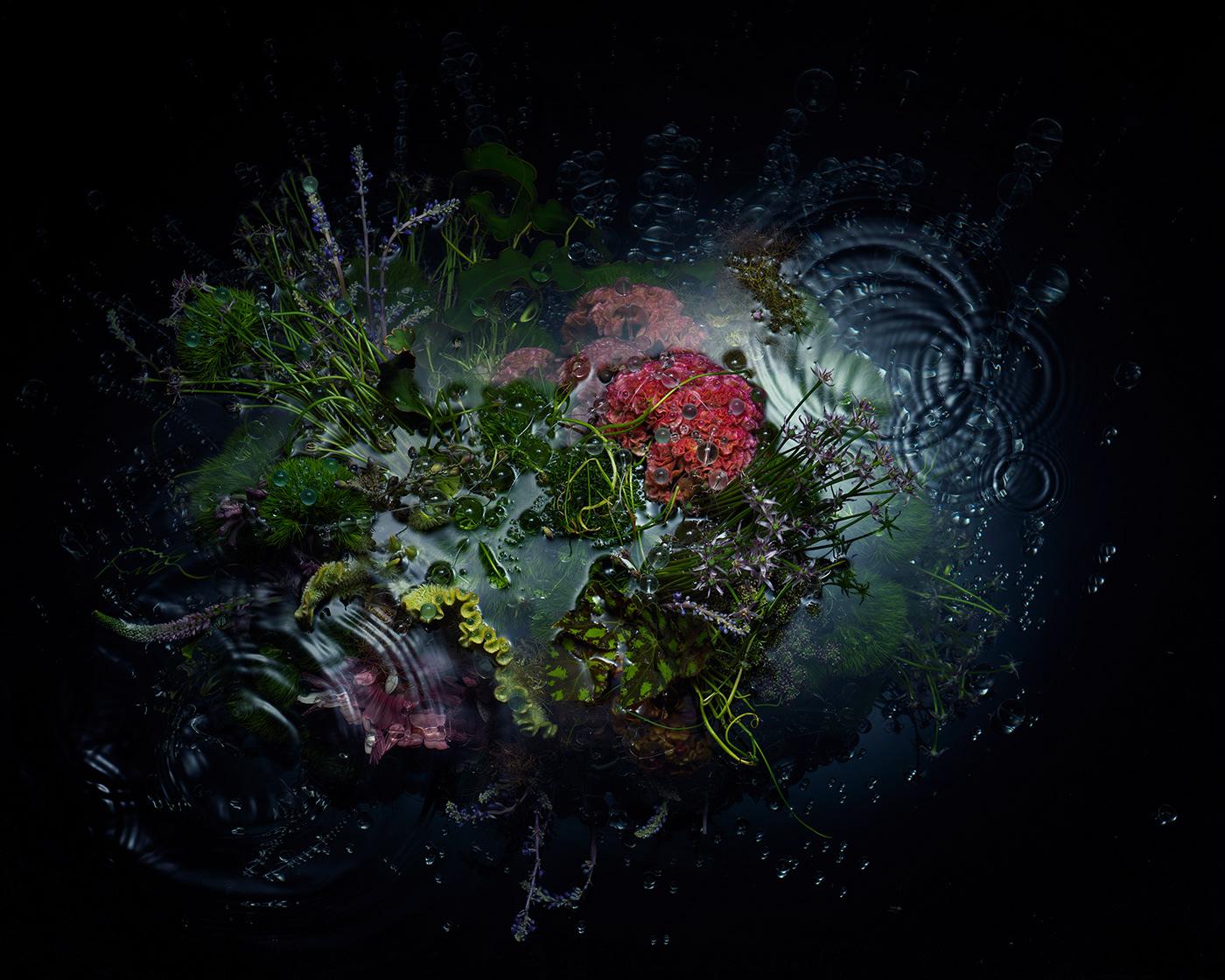 Image may contain: reef, aquarium and fish