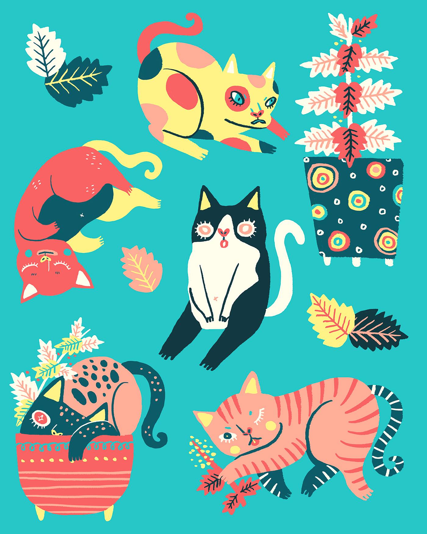 精美的19套貓咪圖案欣賞