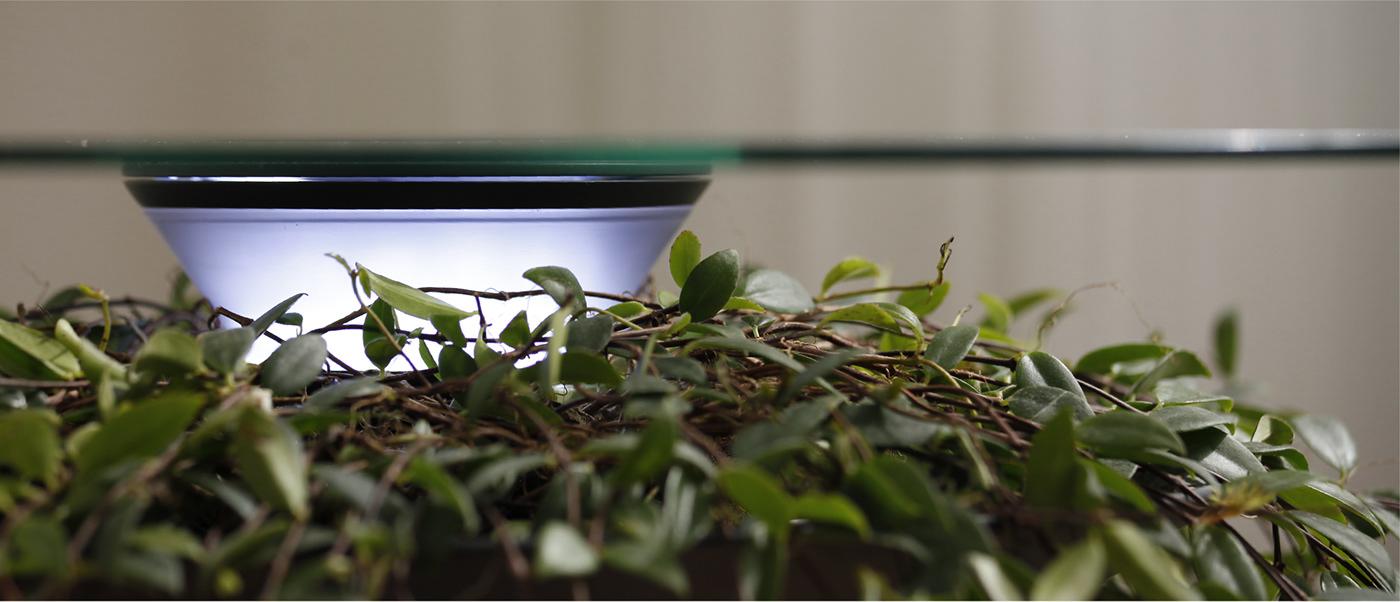 furniture table indoor natural botanic plants elegant planting