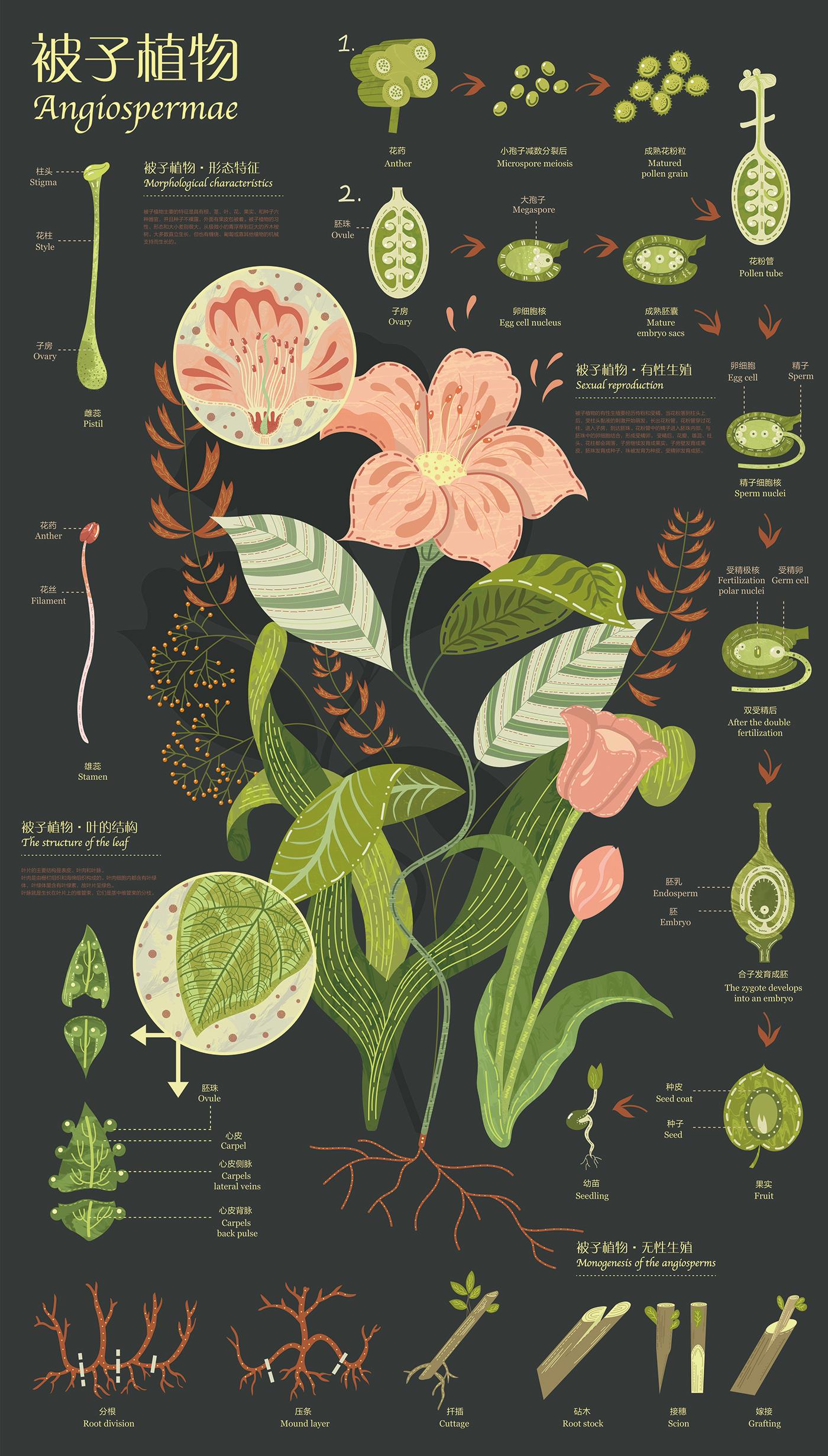 infographic design graphic information plants