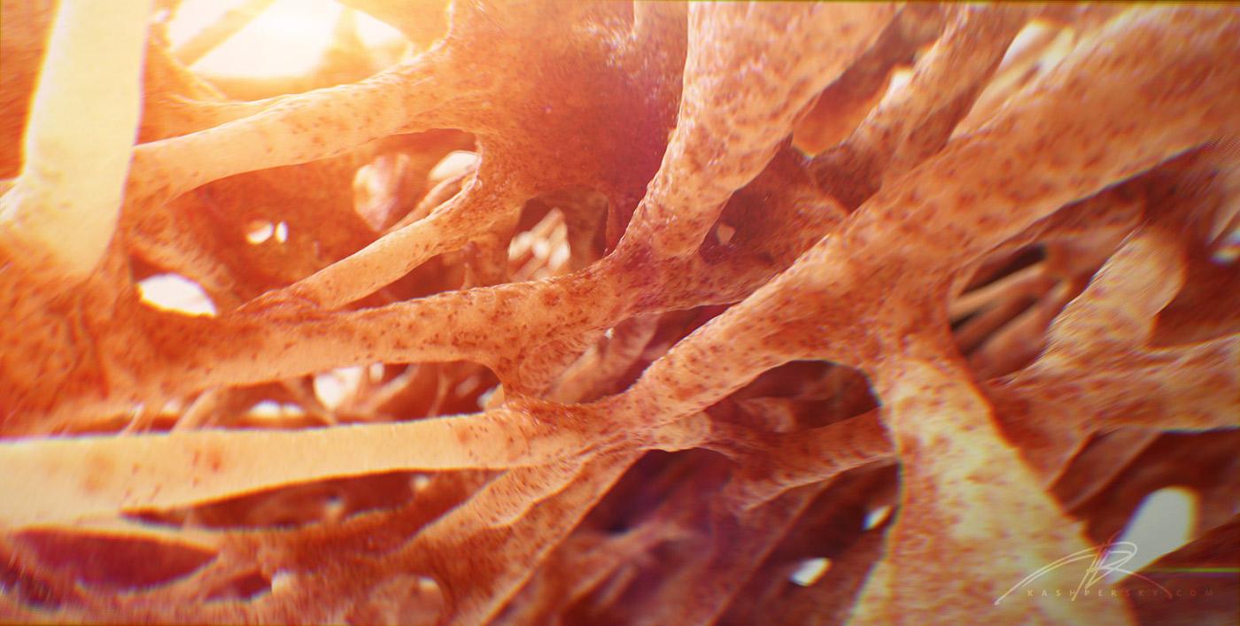 """Bone Cross Section"" for Radius Digital Science on Behance"