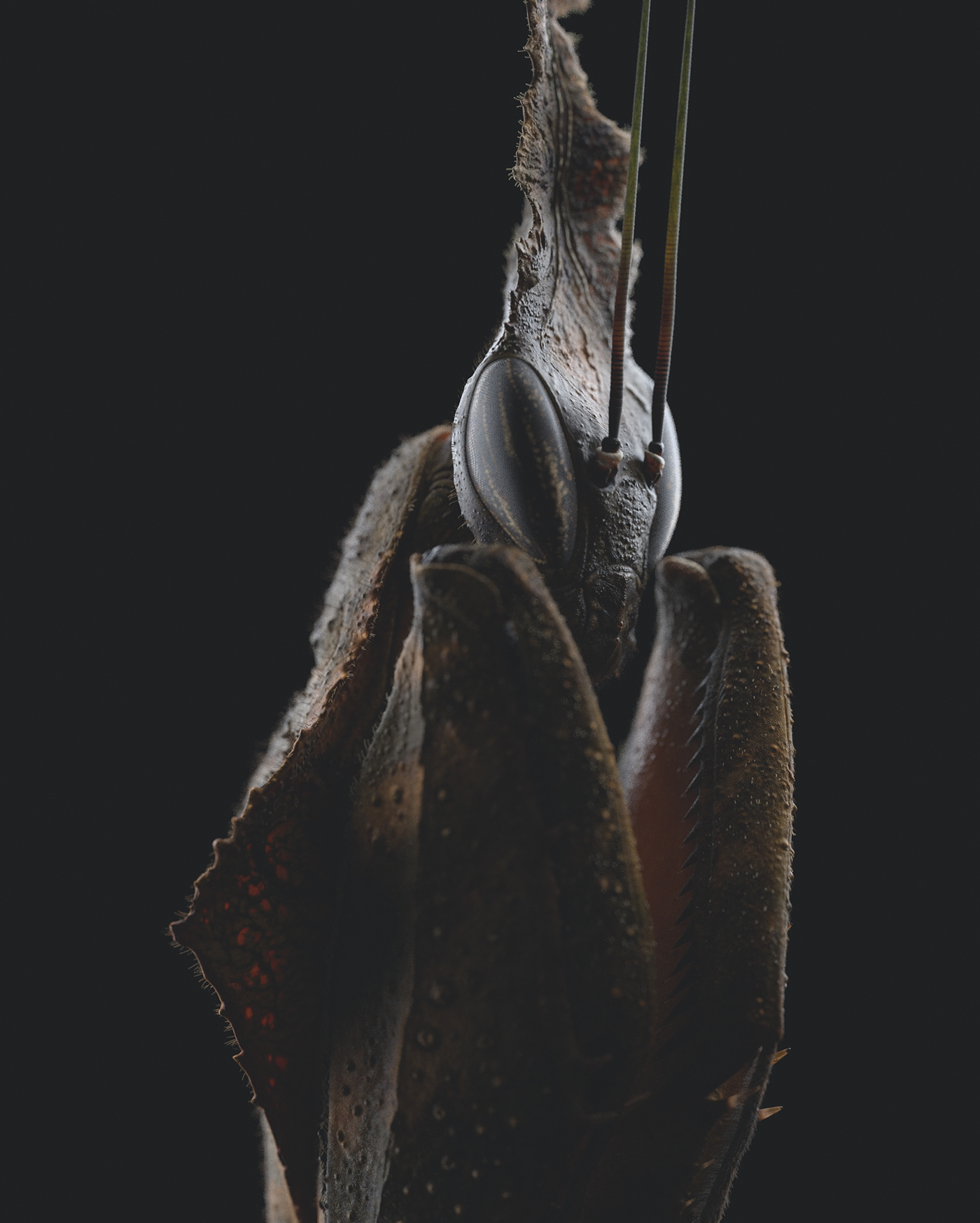animal mantis insect Insects macro Render 3ds max vray ghost