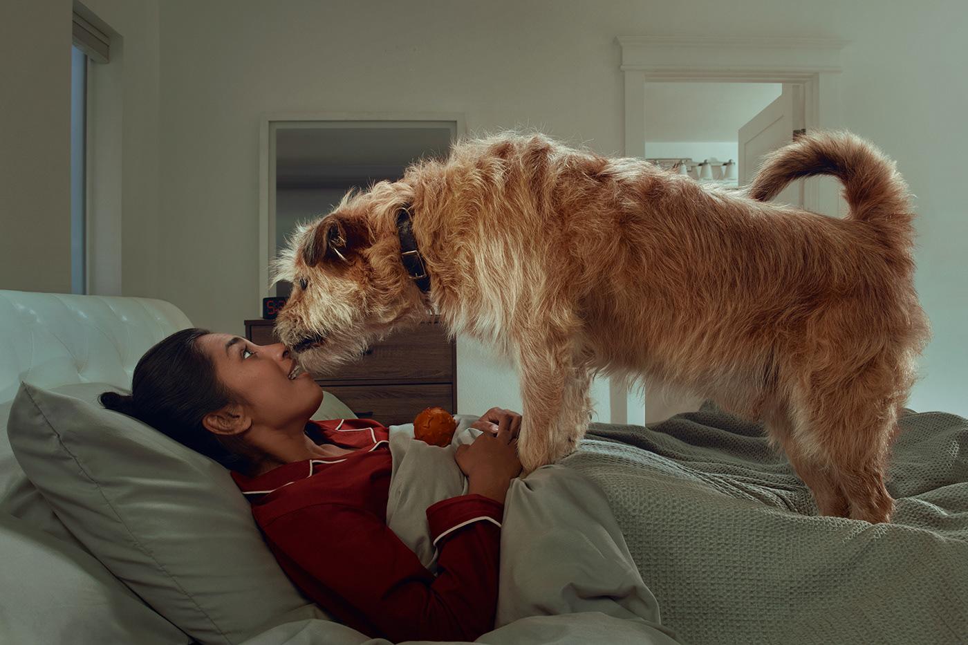 animals calm campaign shoot CBD dogs Health mansbestfriend medication pets veterinary