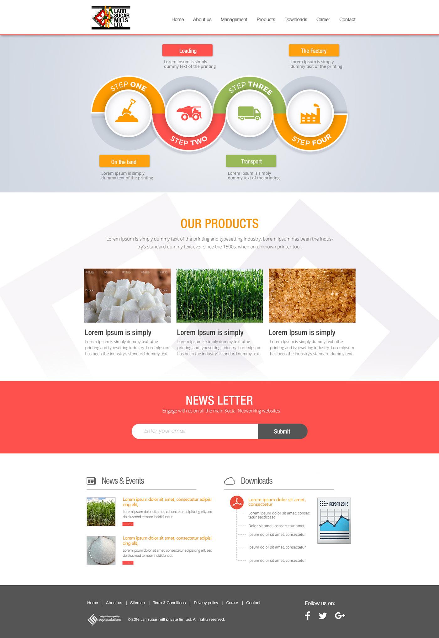 designing Ecommerce Web Design  web development  Website