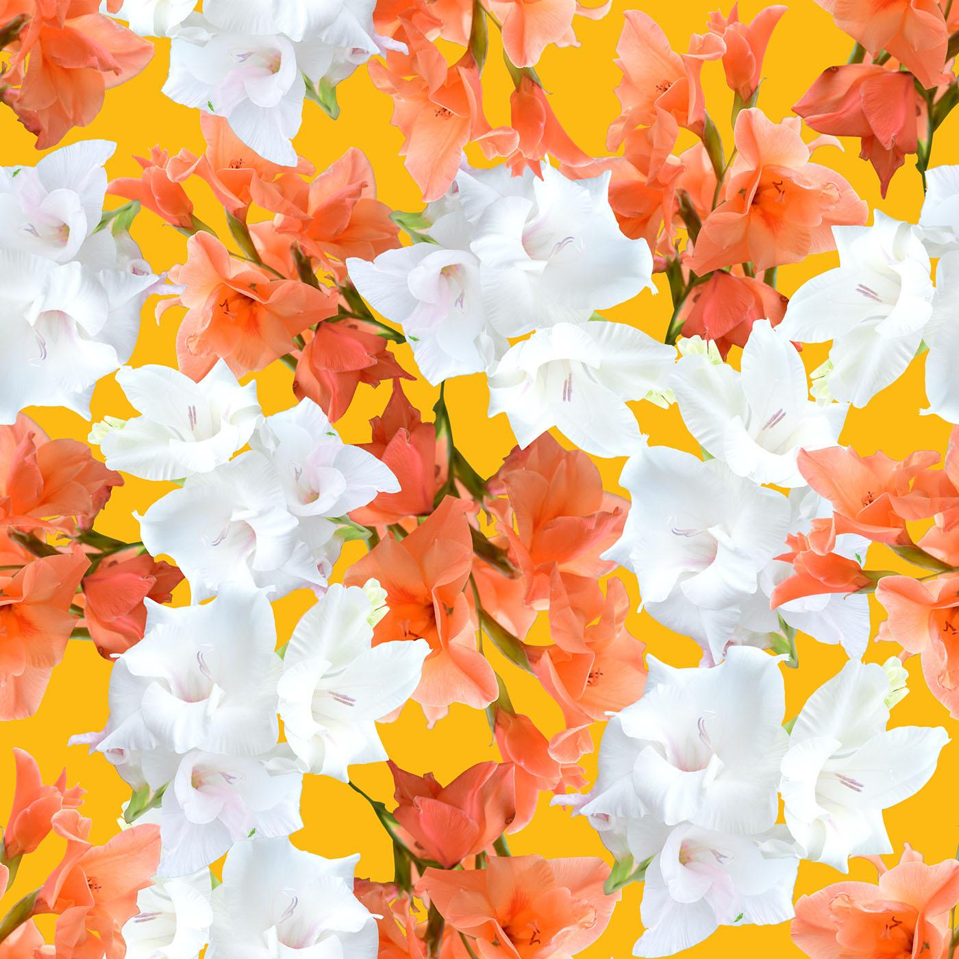 Peach white gladiolus flower pattern on behance peach white gladiolus flower pattern mightylinksfo
