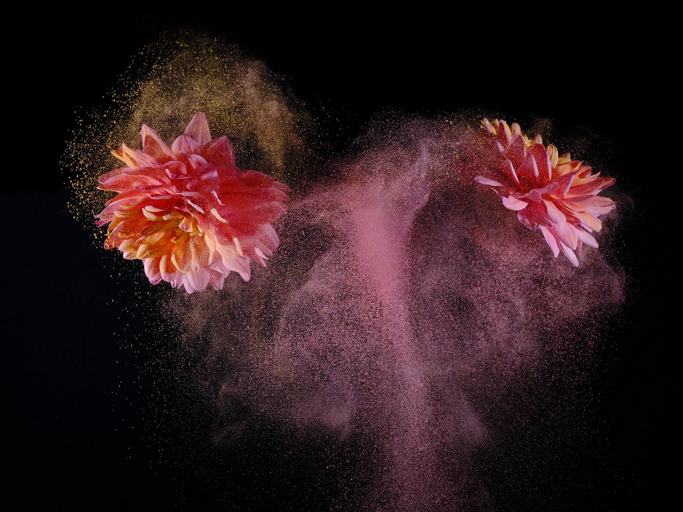 bloemen flower flowerart flowerpower Flowers jumping MOVING Photography  still life studiophotography