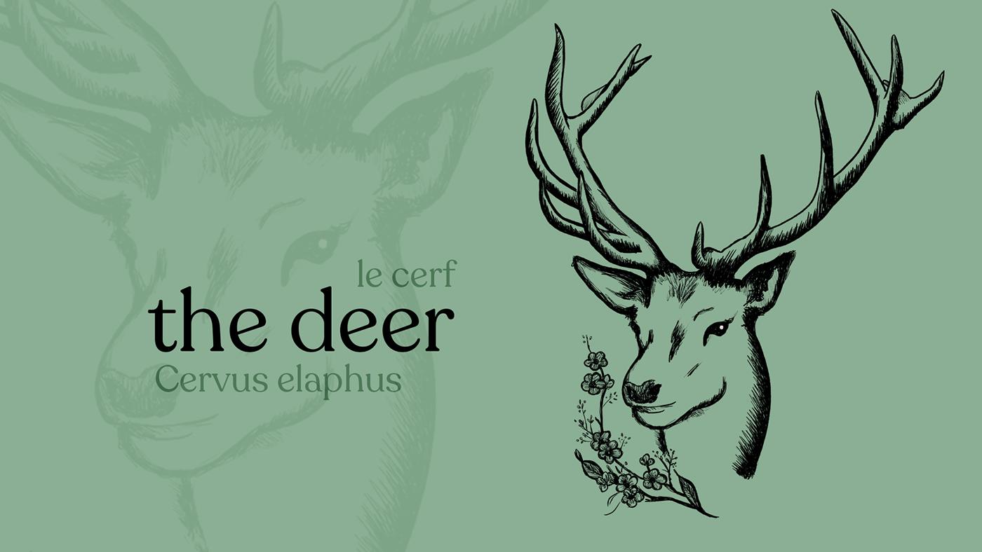 Deer Illustration on green background