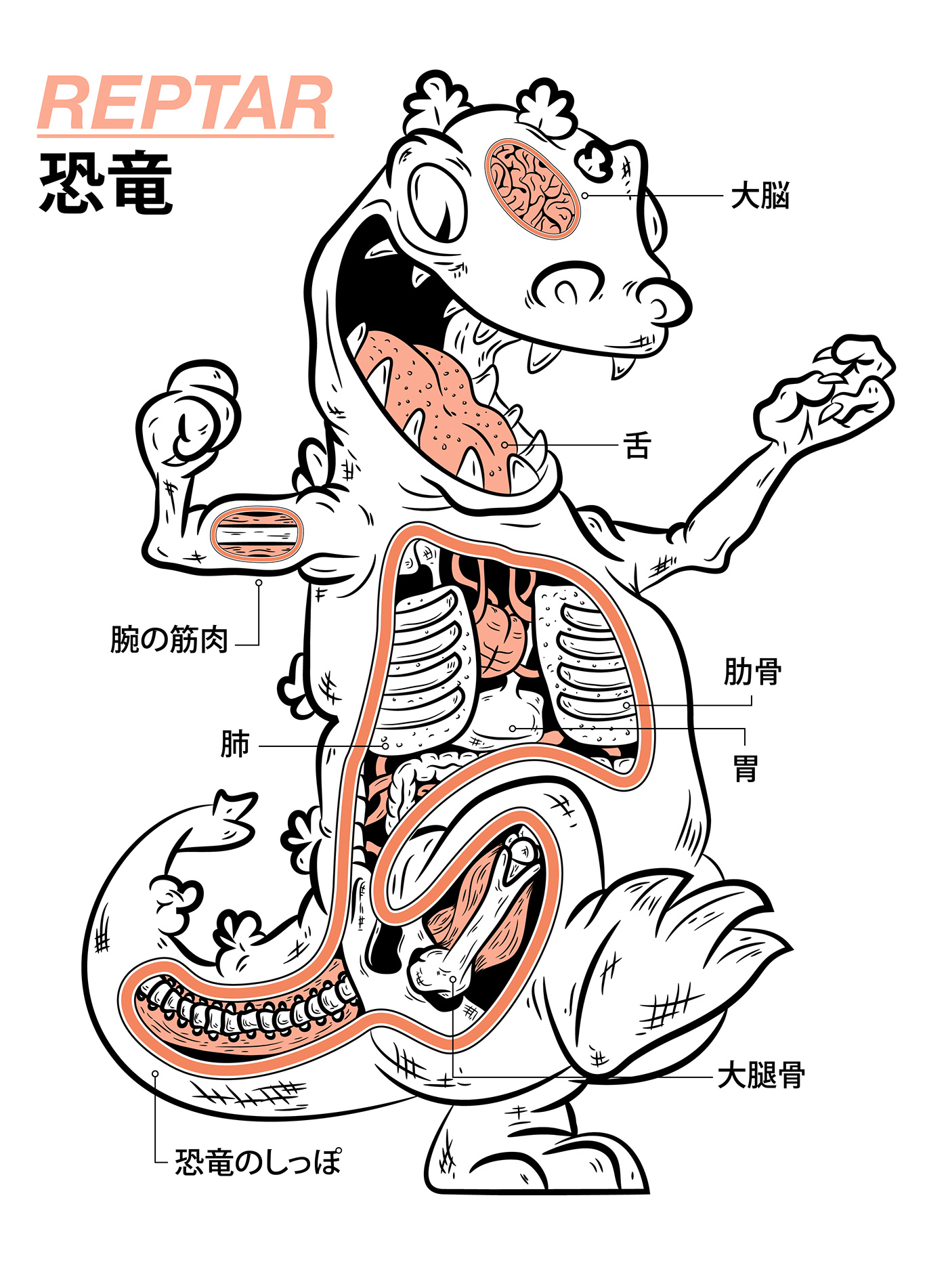 Character Design Job London : Reptar anatomy on behance