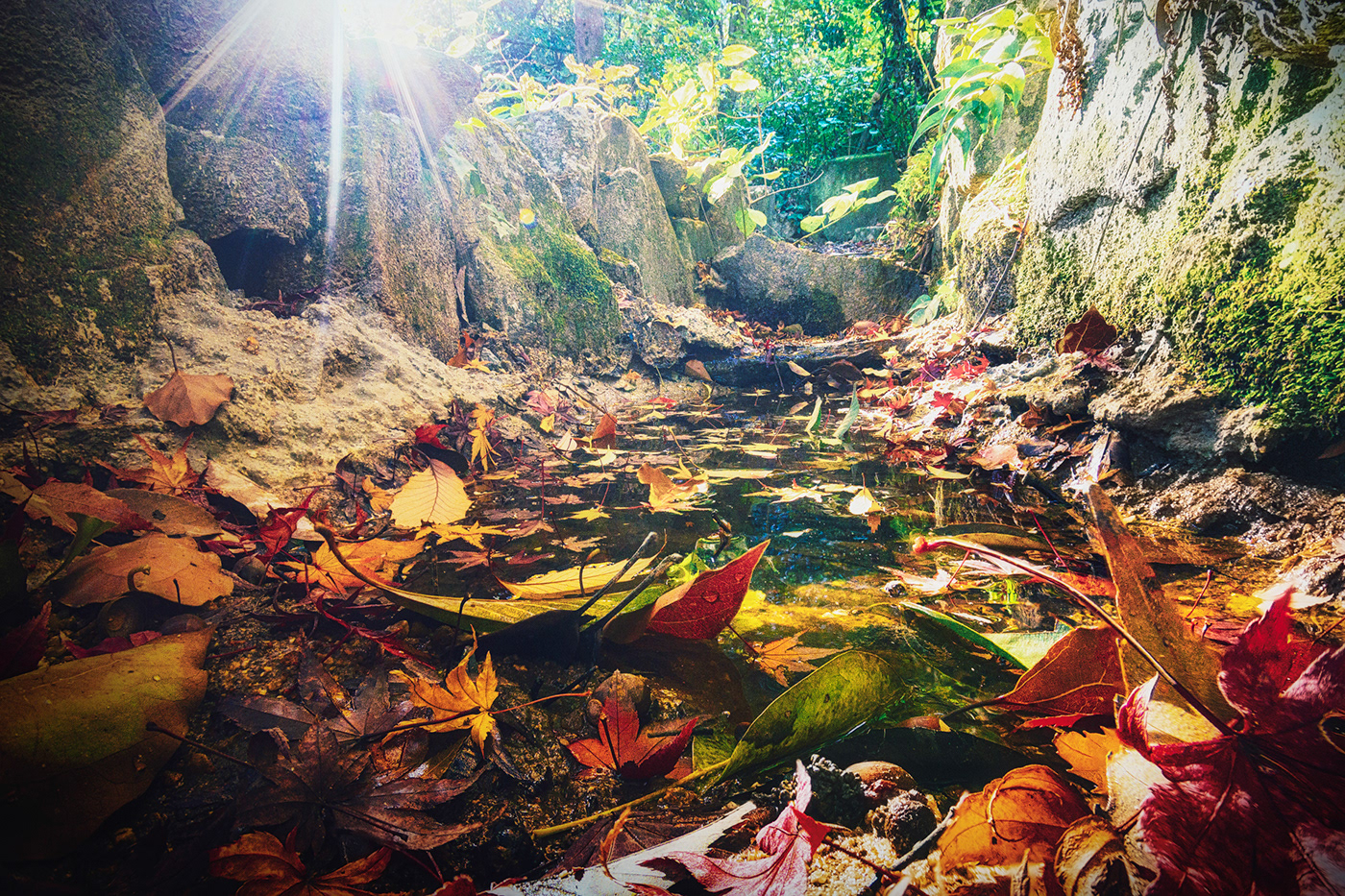 This is the dwarf's favorite place to bathe in the lake. You can also sunbathe on the leaves.