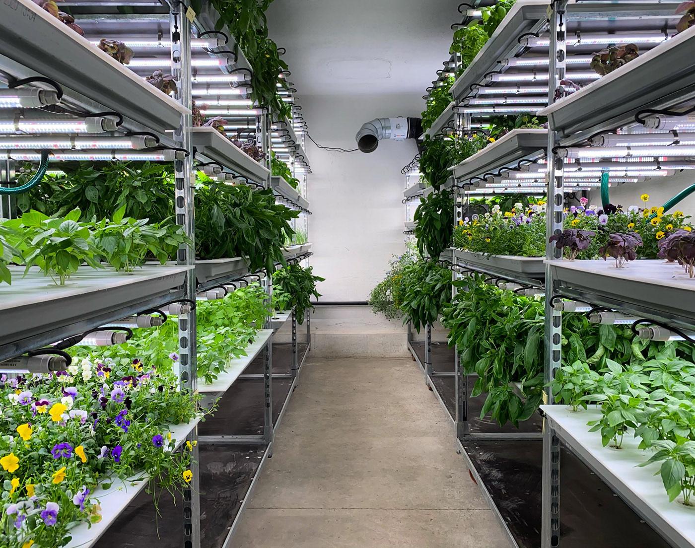 Ariculture farming Food  france plants Sustainability toulouse urban farming vertical farming