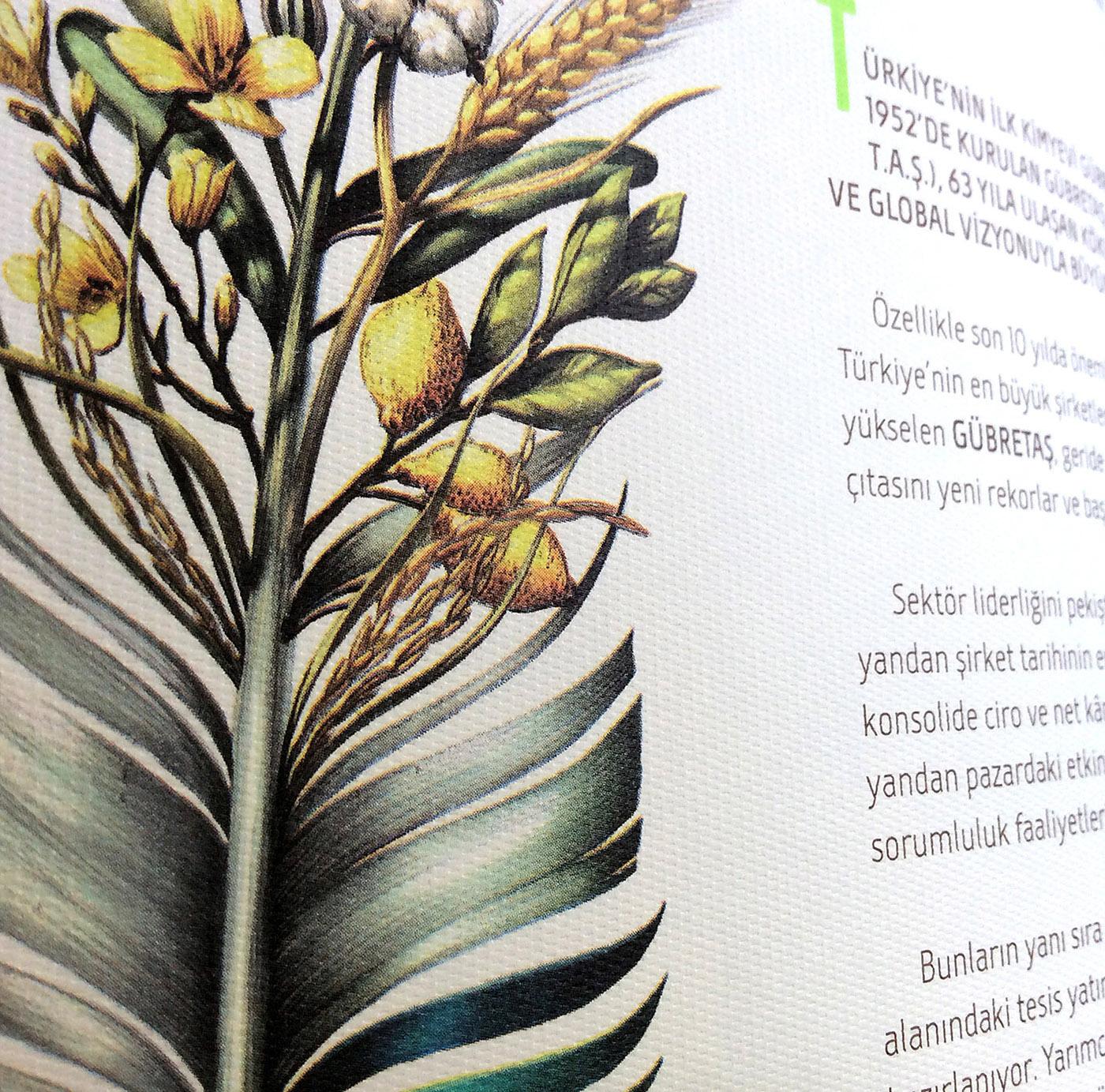 fertilizing Turkey soil seeds ANNUAL report memoria corporativa fetilizing istanbul agriculture faaliyet raporu Gübretas Graffiti Studio
