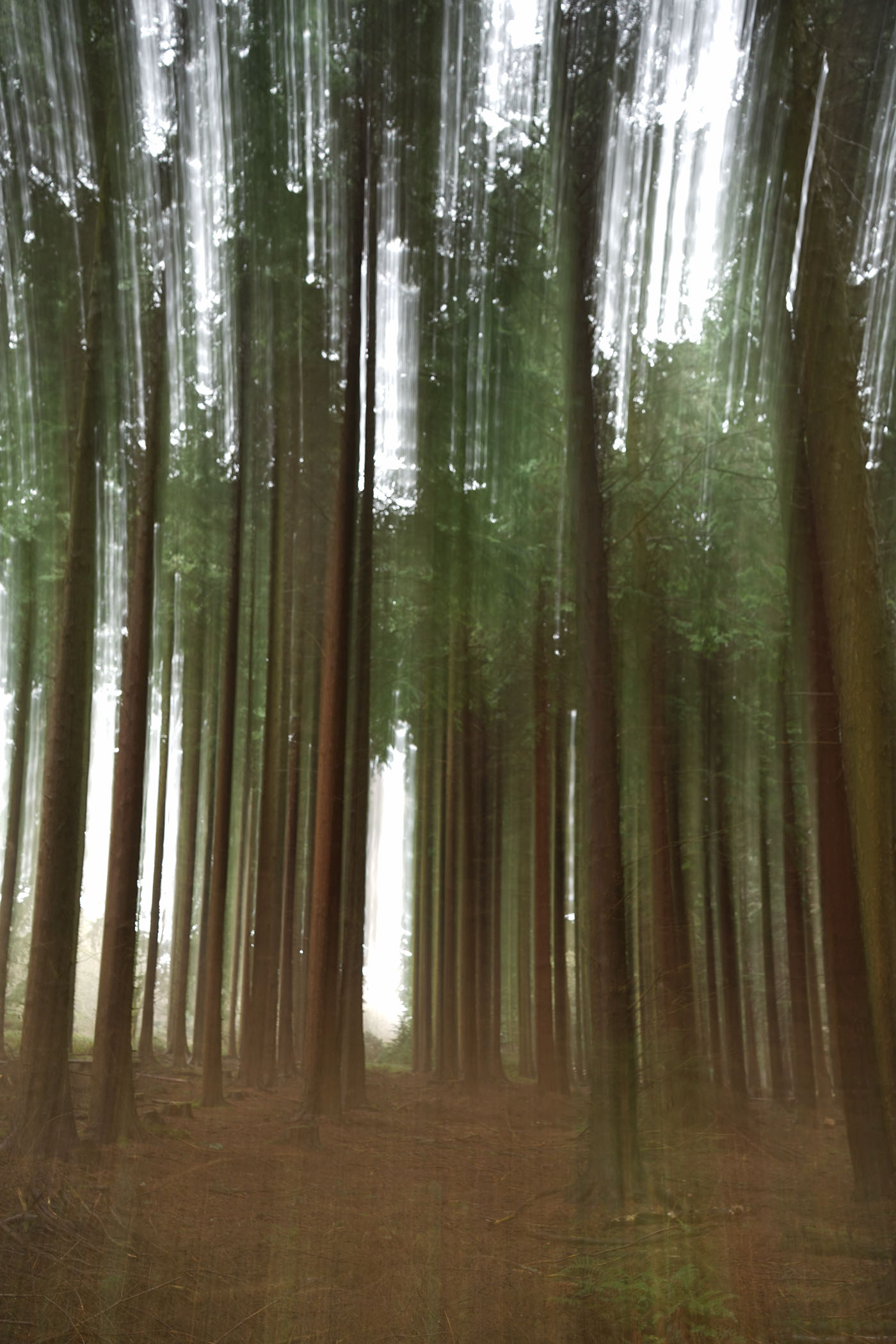 Shinrin Yoku forest bathing trees long exposure panning woods blurred movement blur lightroom manfrotto Sony Alpha A7ii Photography