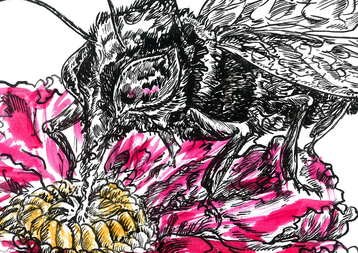 ink artwork rose flower pink bee Drawing  ILLUSTRATION  watercolor Nature