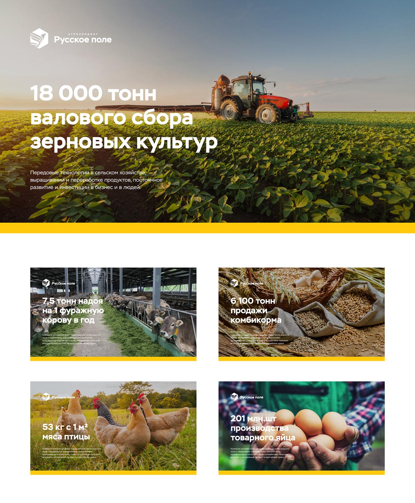 branding  logo Logotype brand identy Agroholding фирменный стиль графический дизайн yellow