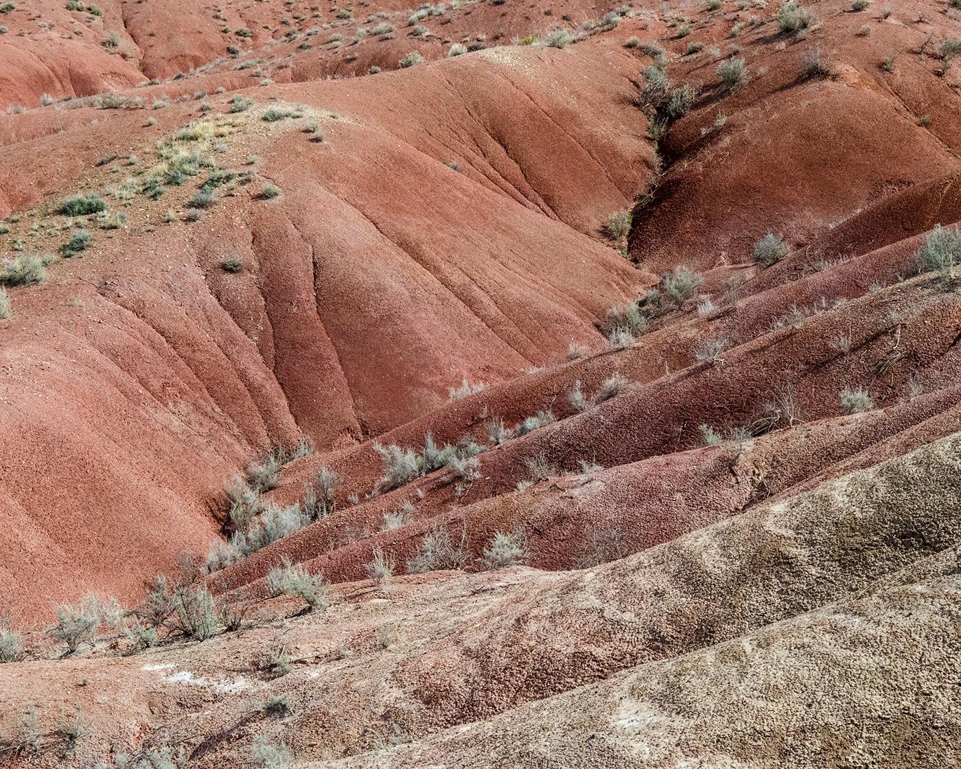 plants desert landscapes national parks southwest