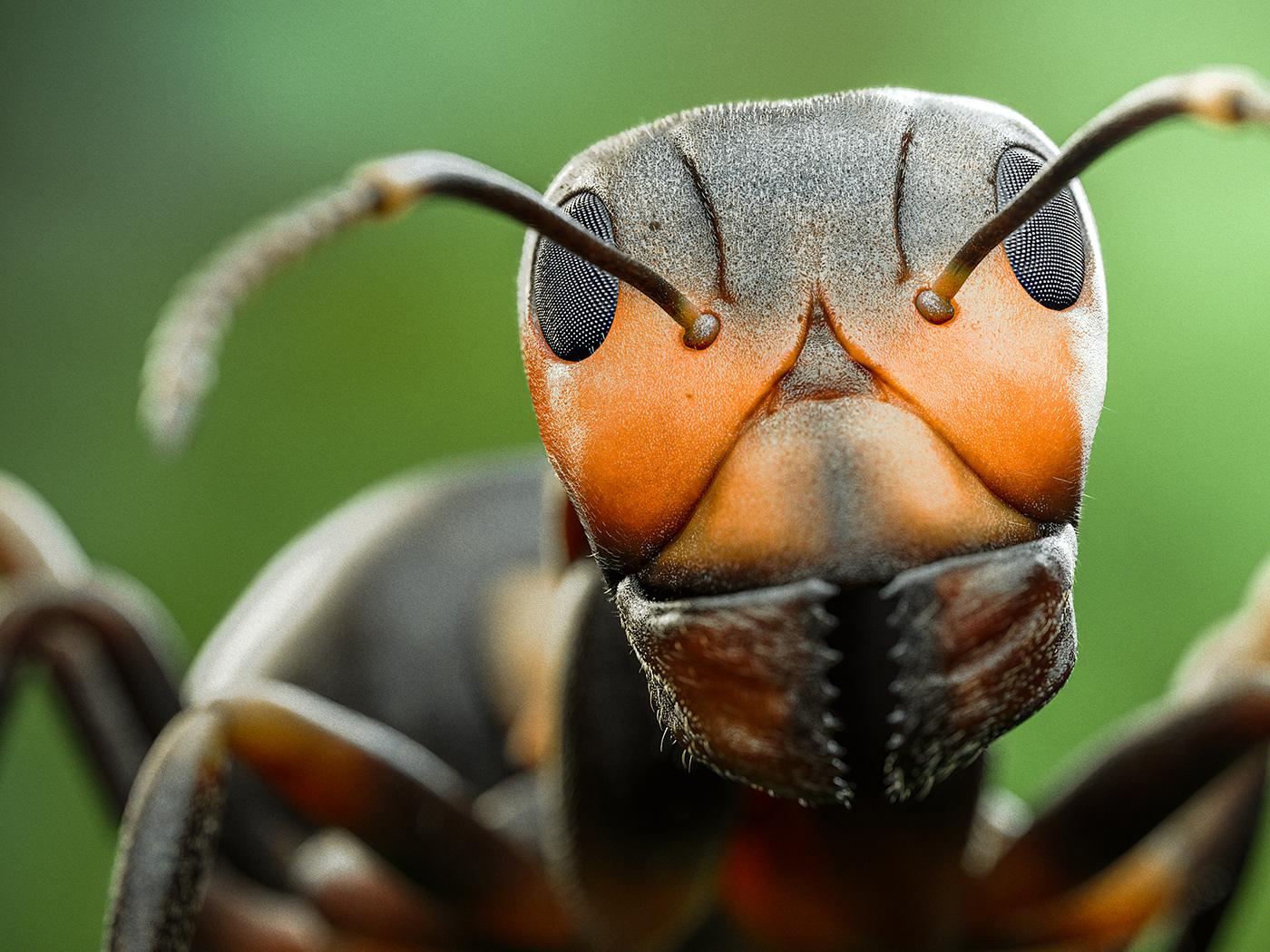 Image may contain: invertebrate