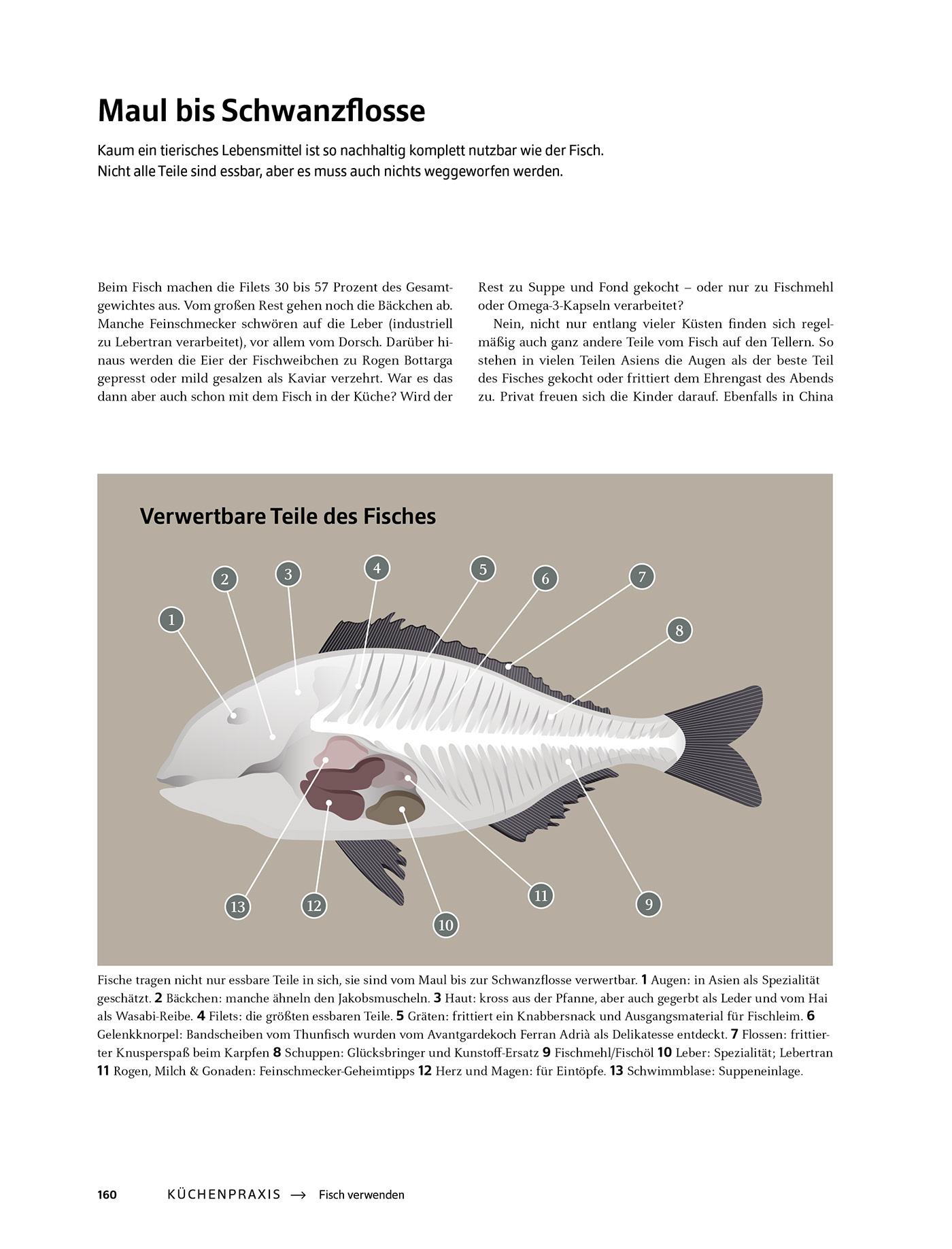 Das Große Buch Vom Fisch