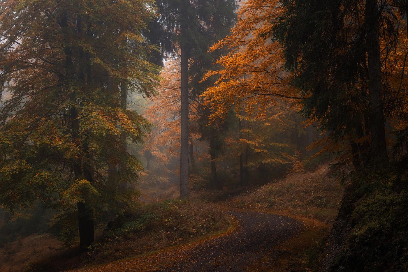 Those Dark Autumn Days On Behance