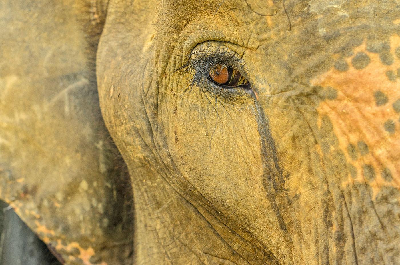 elephants Documentary  Photography  sumatra elephantart