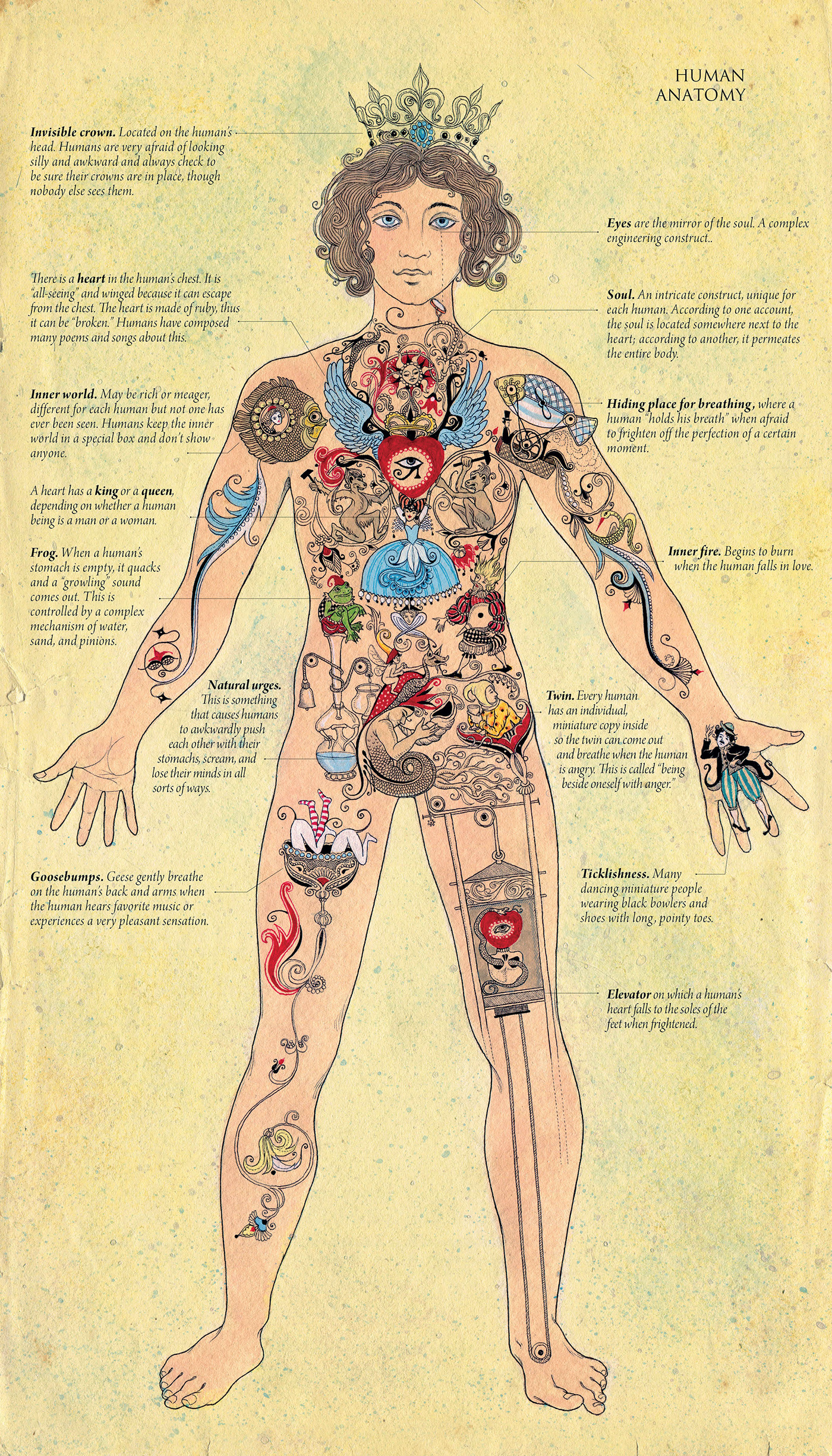 Human Anatomy from the Nenuphar Book on Behance
