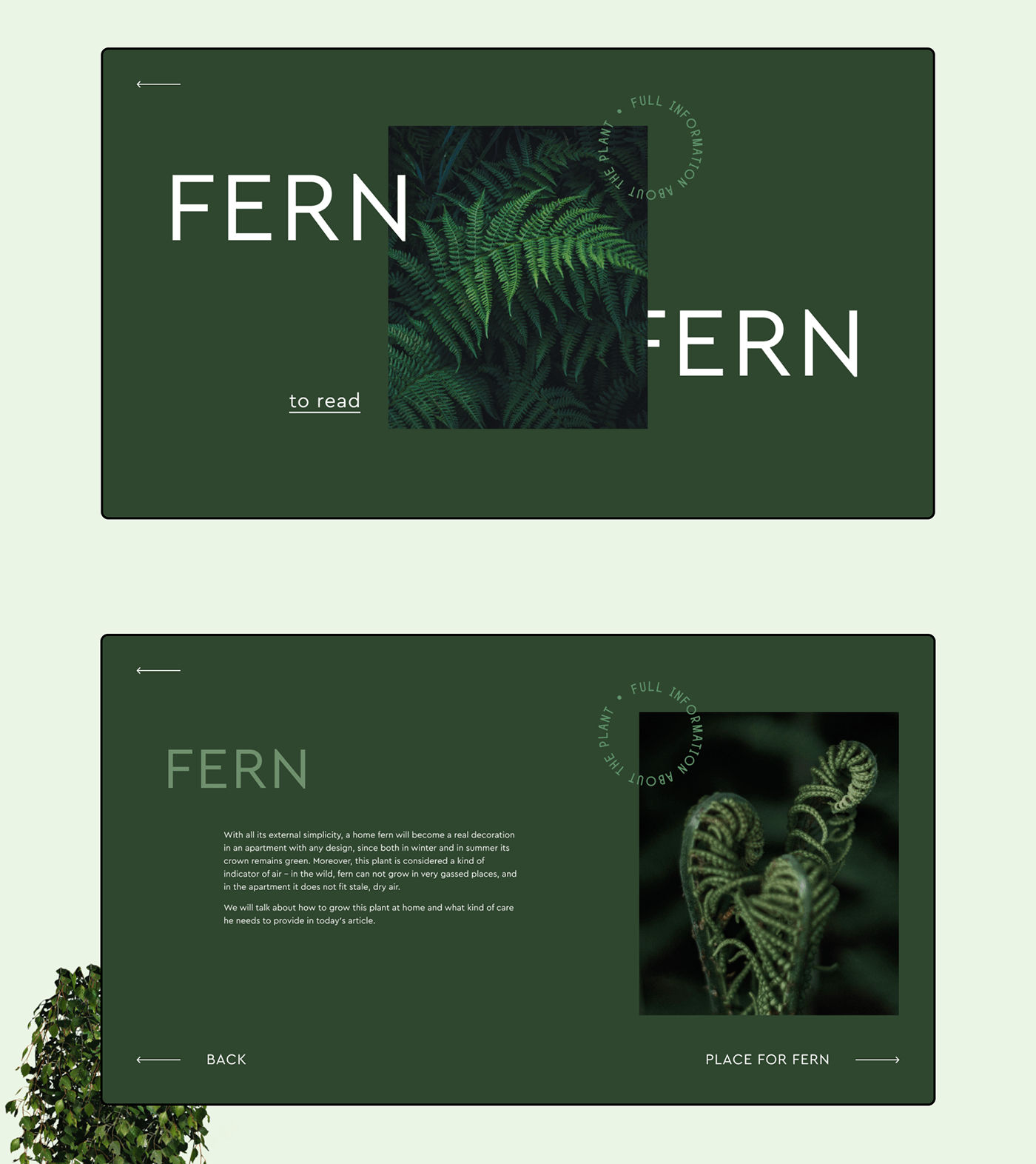 Web design designer Web Design  green Plant plants animation  Interface animated interface