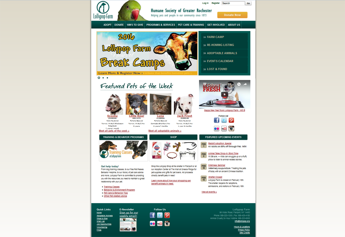 Web homepage animal shelter redesign web page Website