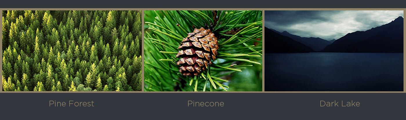 hotel complex hotel lesnaya pushcha Лесная пуща отель Pinecone pine Forest lake