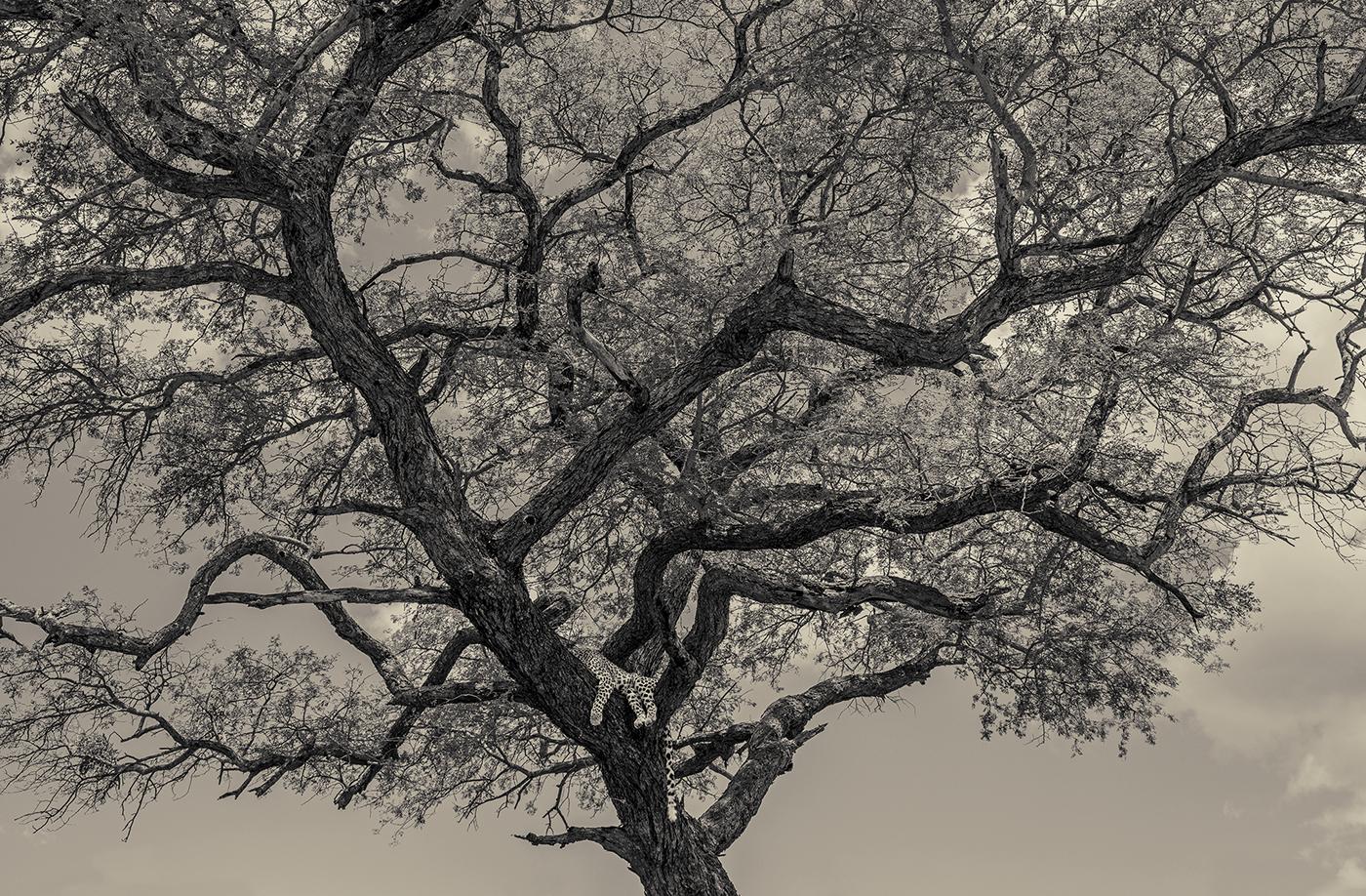 CREATURES I | Antti Viitala Photography