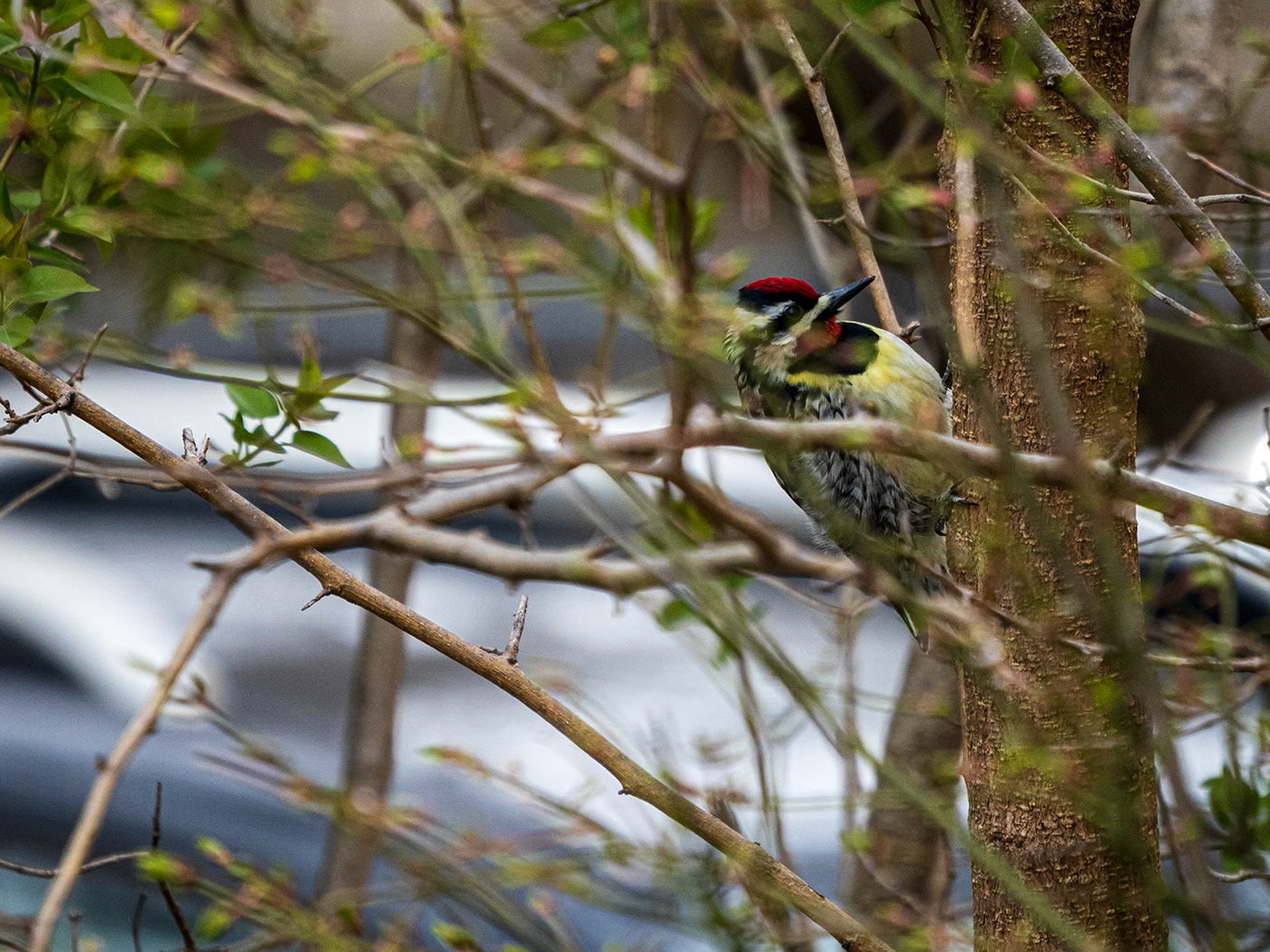 backyard birding birds city Nature Urban zoom lens