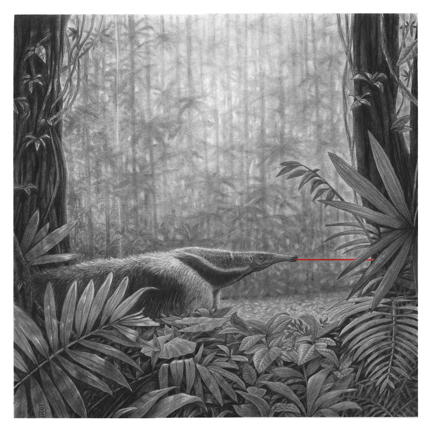animals anteater Drawing  forest jungle