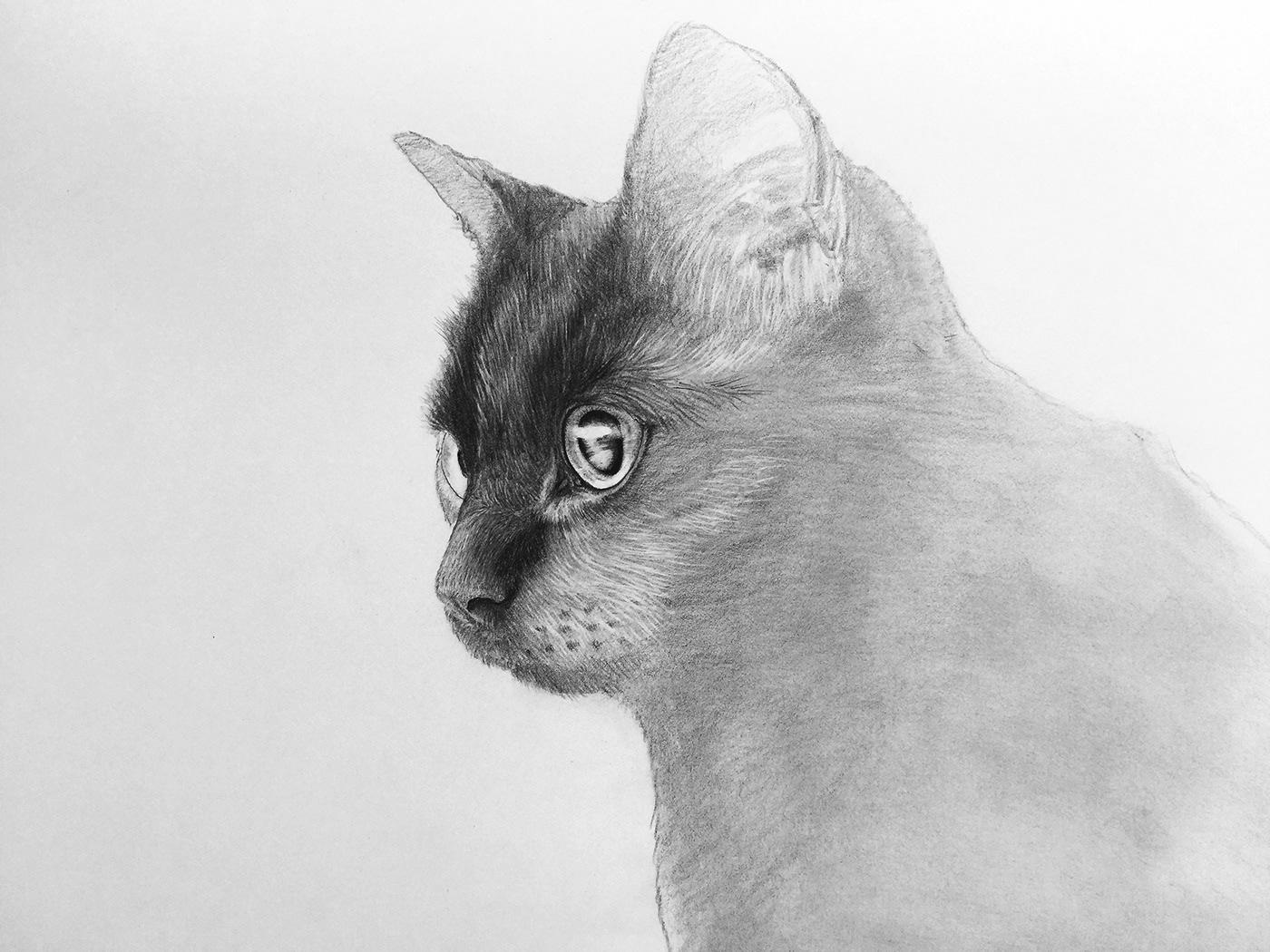 Pencil drawing black cat on behance