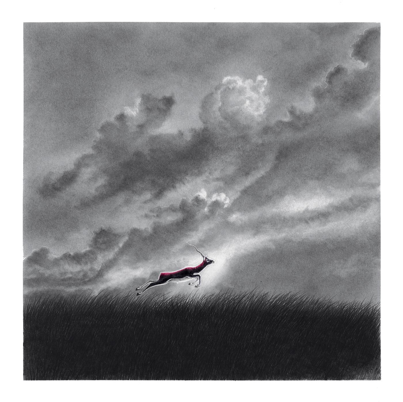 animal antiloppe blackbuck clouds