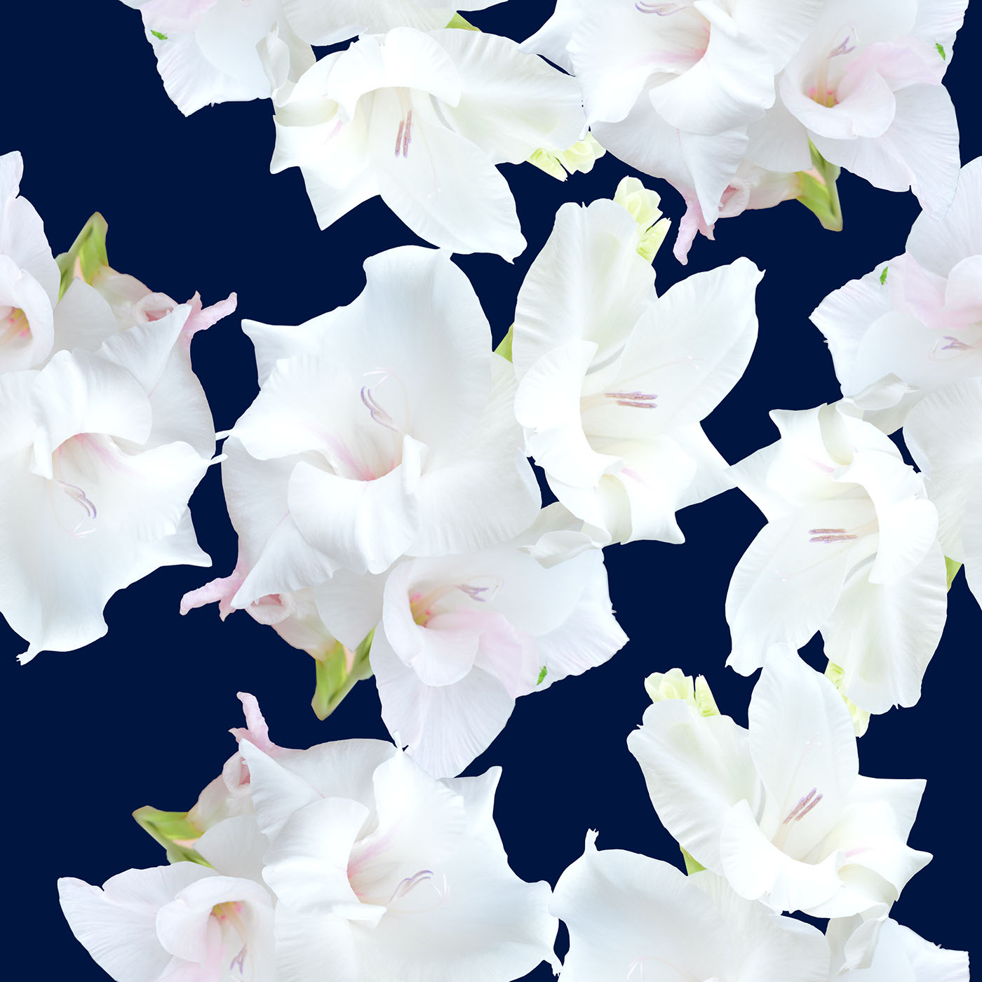 White gladiolus flower pattern on behance gladiolus flower pattern mightylinksfo