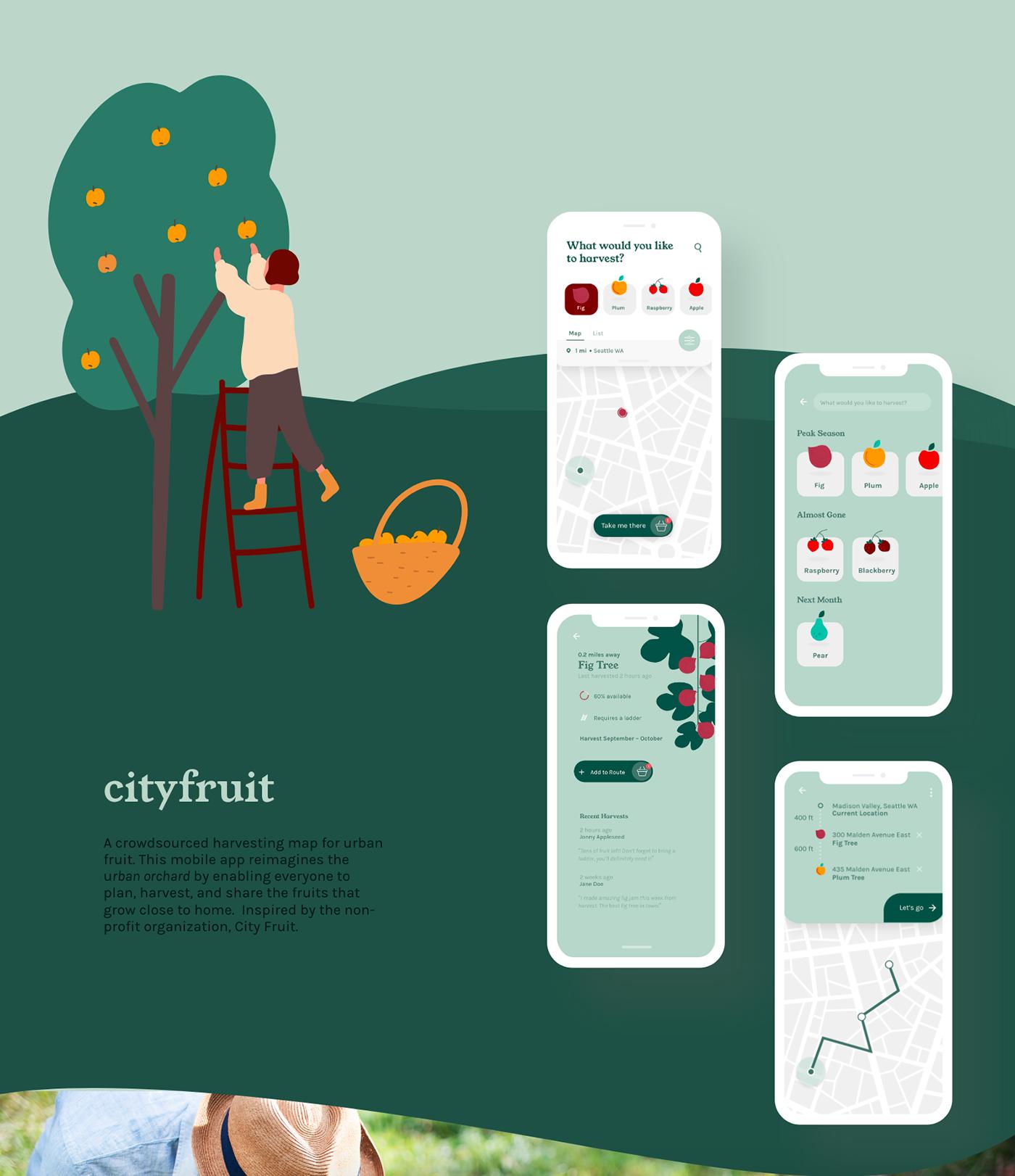Sustainability product design  UX design Food waste zero waste fruit harvest seattle