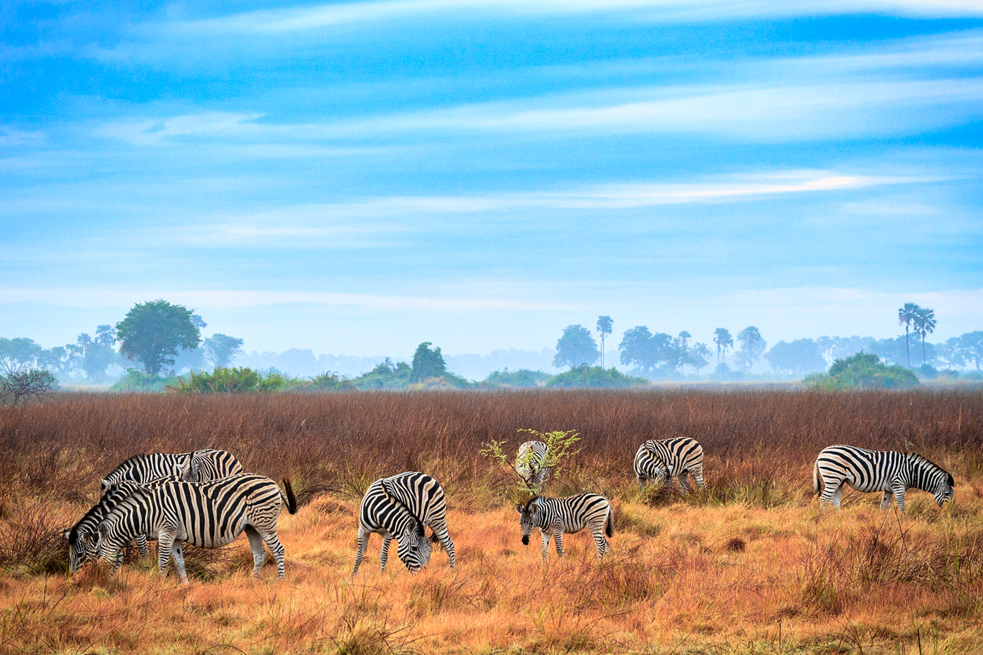 africa Botswana wildlife wilderness Okavango Delta Lions elephants Buffalo leopard hippo