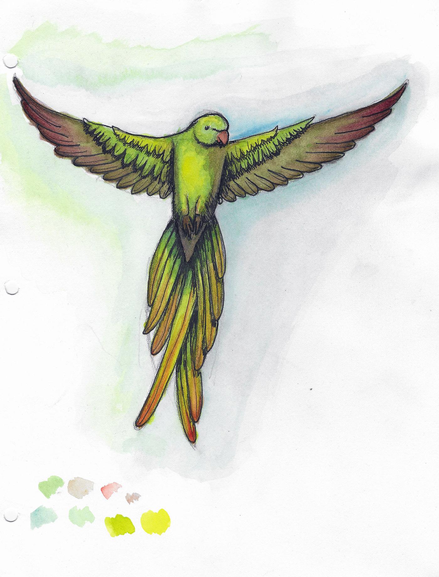 Parrot Sketch On Behance