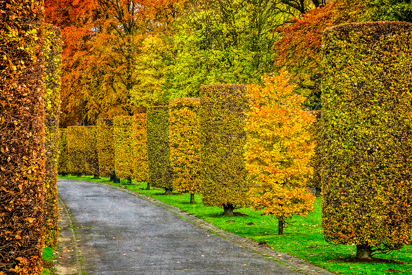 belgium brussels Park lake autumn yellow red foliage trees leaves