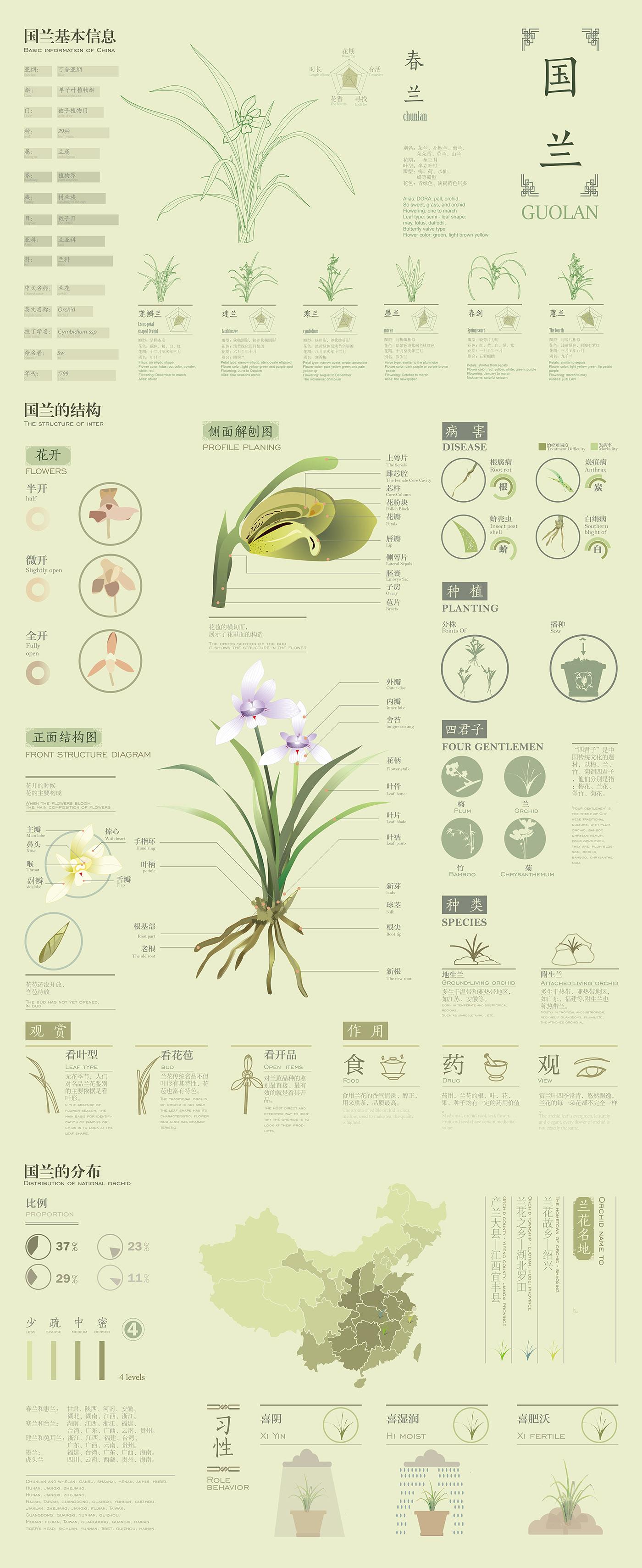 兰花,草,中国传统元素 花,图表,信息